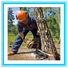 Small to Medium Tree and Shrub Removal